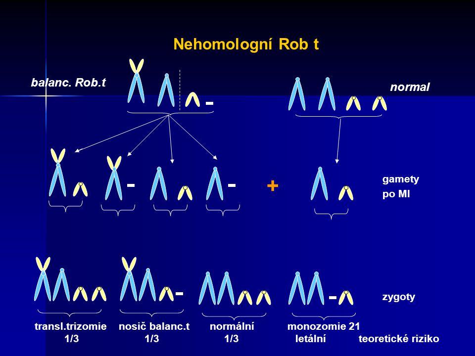 + Nehomologní Rob t balanc. Rob.t normal gamety po MI zygoty