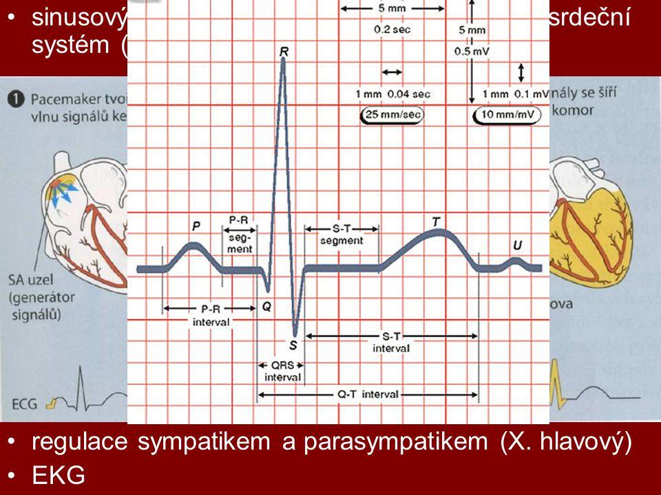 sinusový uzlík, síňokomorový uzlík, převodní srdeční systém (Hisův svazek, Purkyňova vlákna)