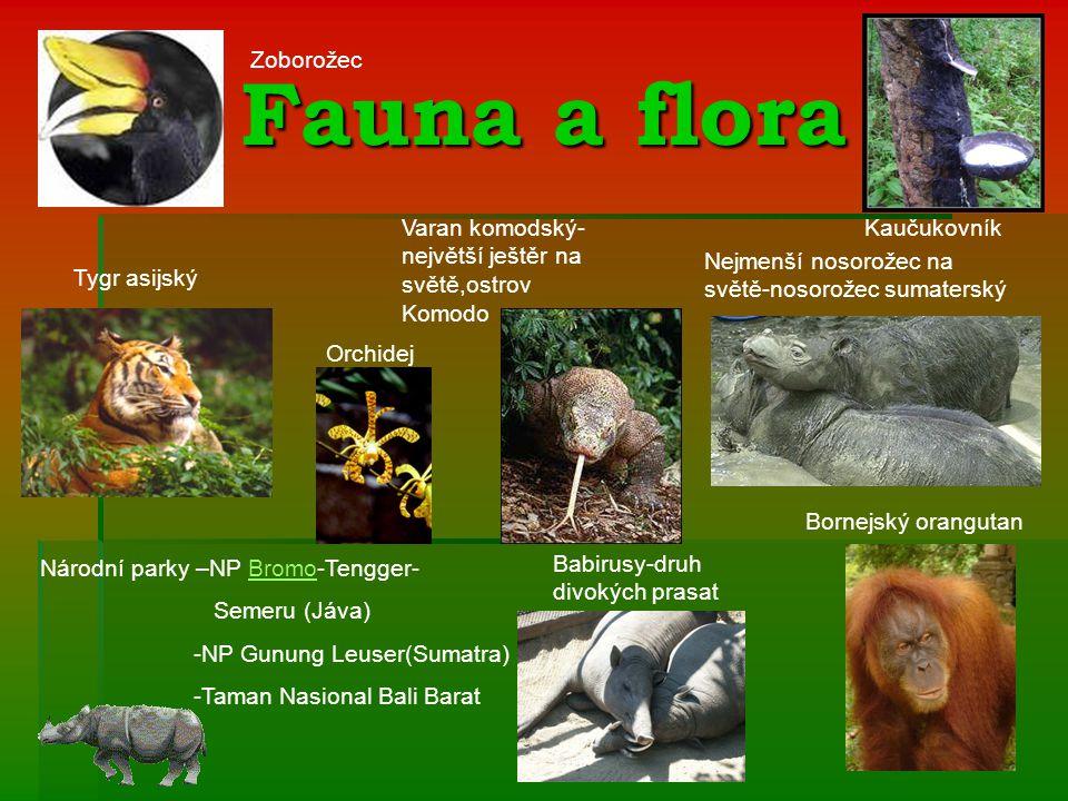 Fauna a flora Zoborožec