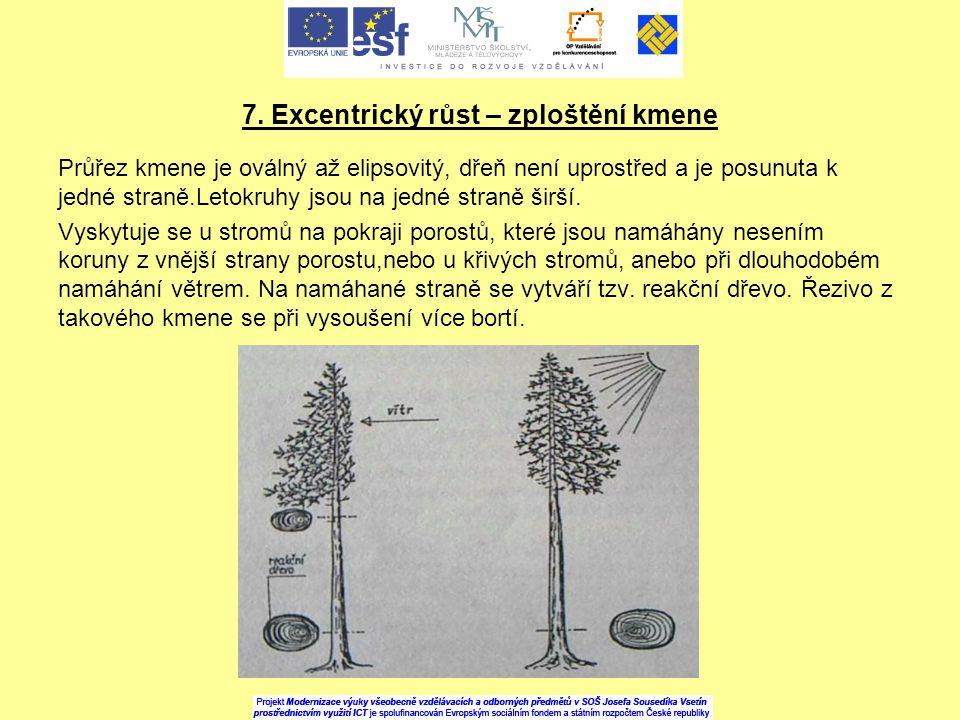 7. Excentrický růst – zploštění kmene