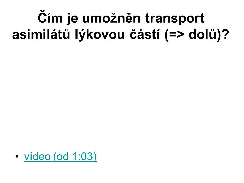 Čím je umožněn transport asimilátů lýkovou částí (=> dolů)