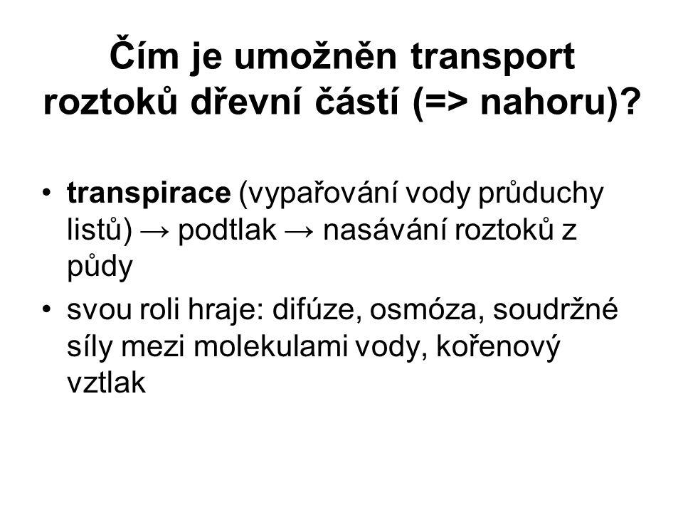 Čím je umožněn transport roztoků dřevní částí (=> nahoru)