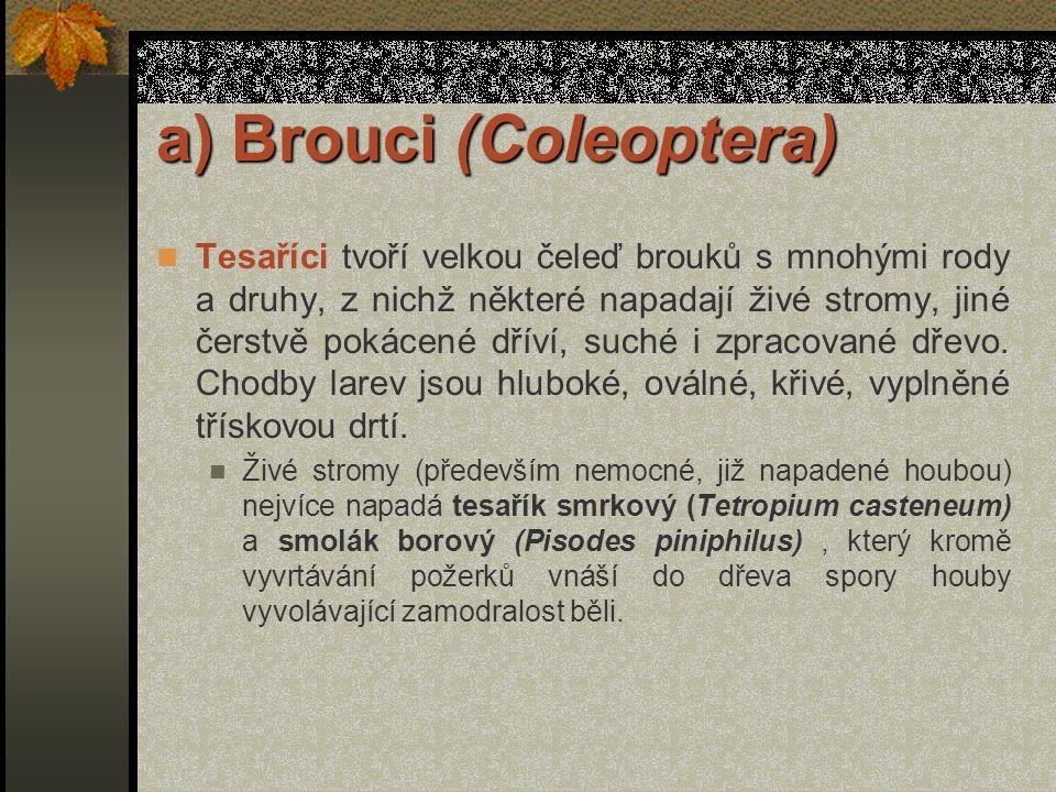 a) Brouci (Coleoptera)