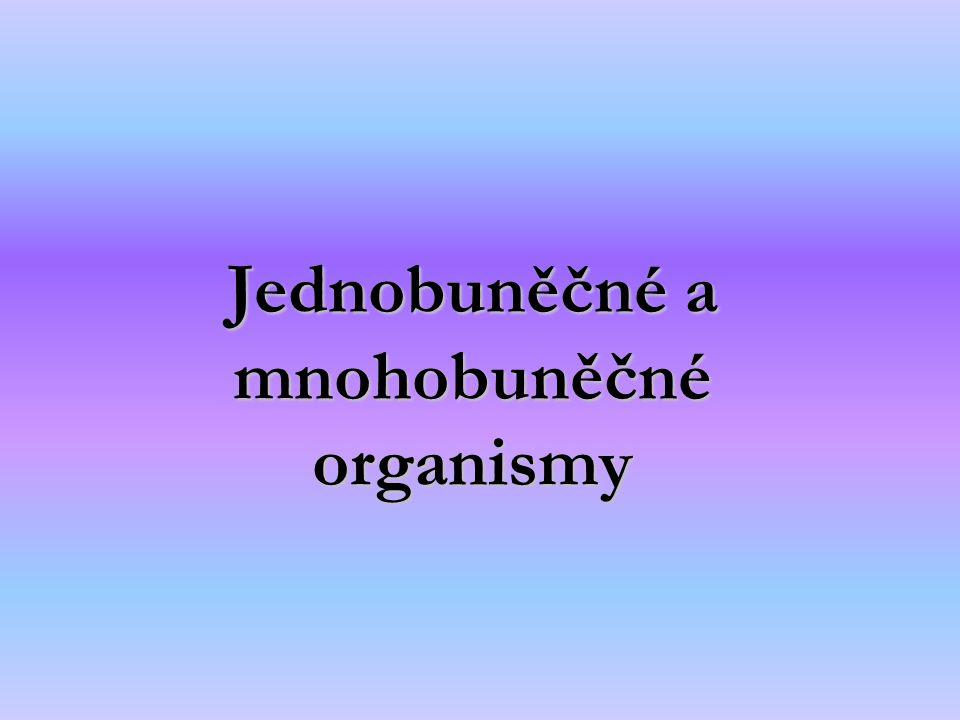 Jednobuněčné a mnohobuněčné organismy
