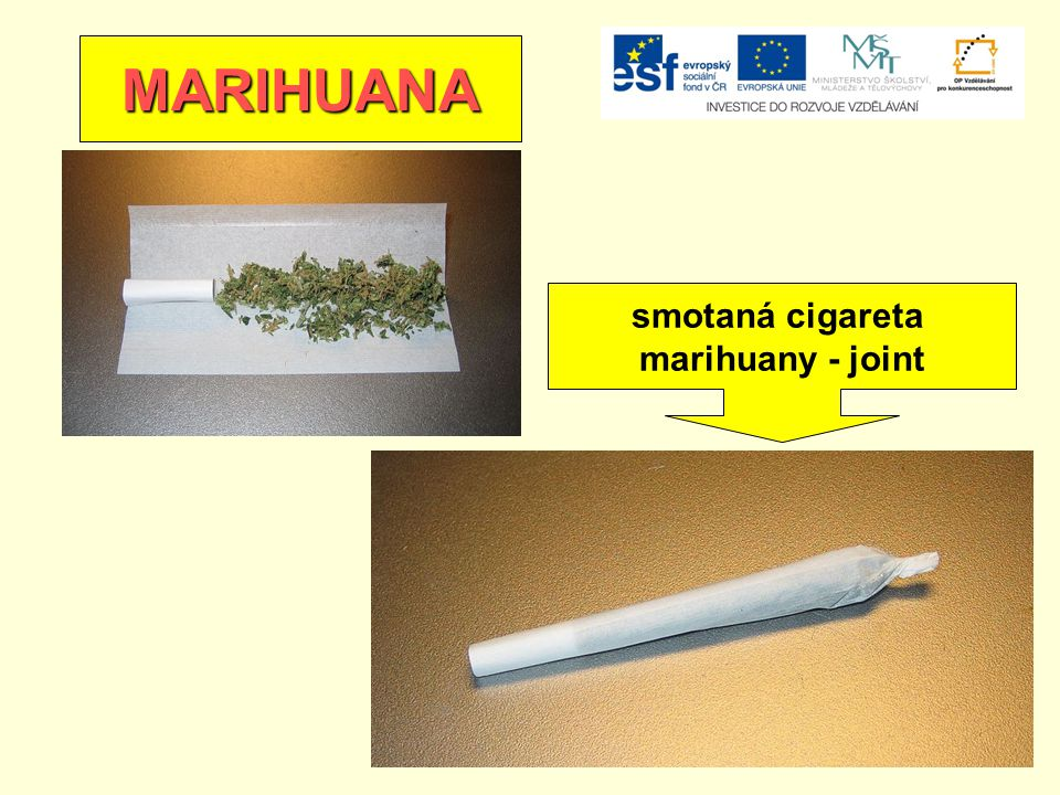 MARIHUANA smotaná cigareta marihuany - joint