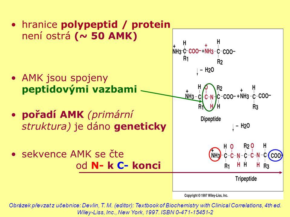 hranice polypeptid / protein není ostrá (~ 50 AMK)