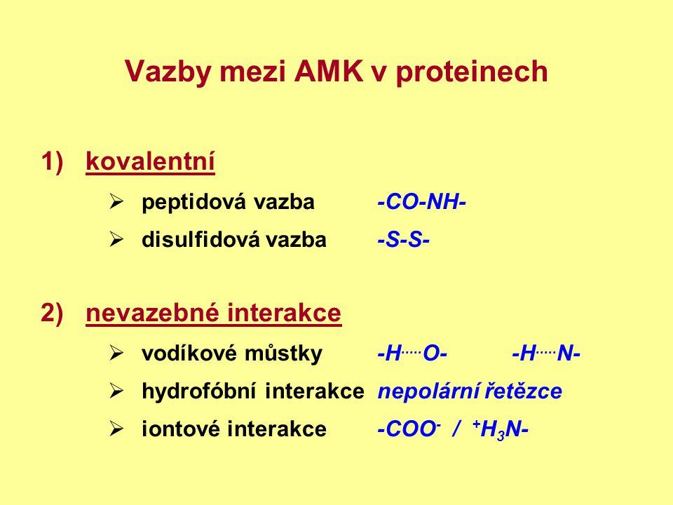 Vazby mezi AMK v proteinech