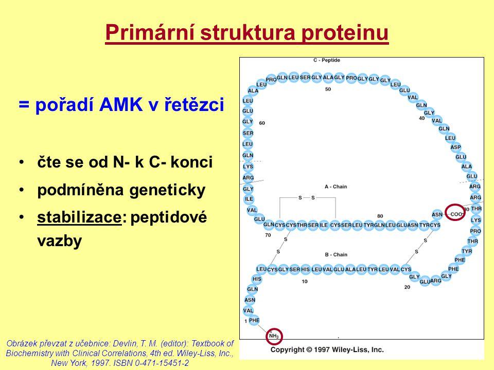 Primární struktura proteinu