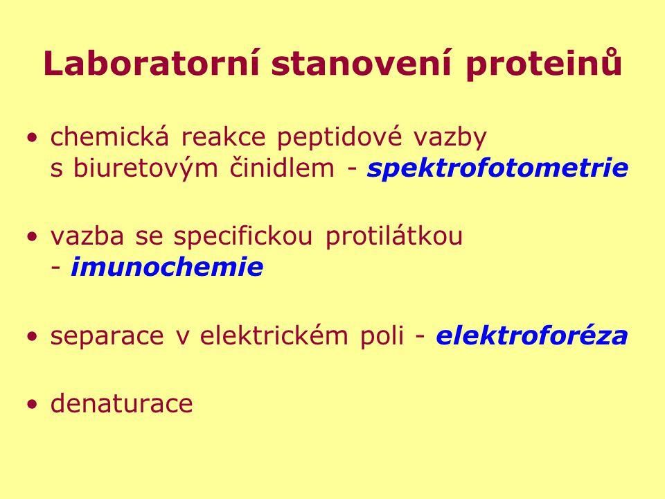 Laboratorní stanovení proteinů