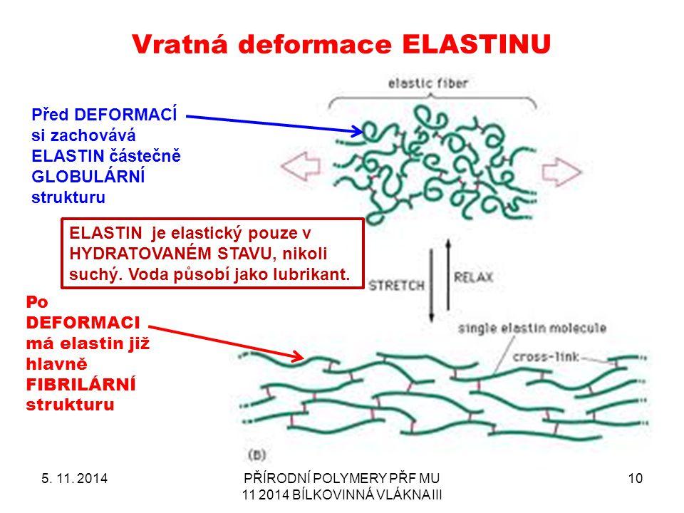 Vratná deformace ELASTINU
