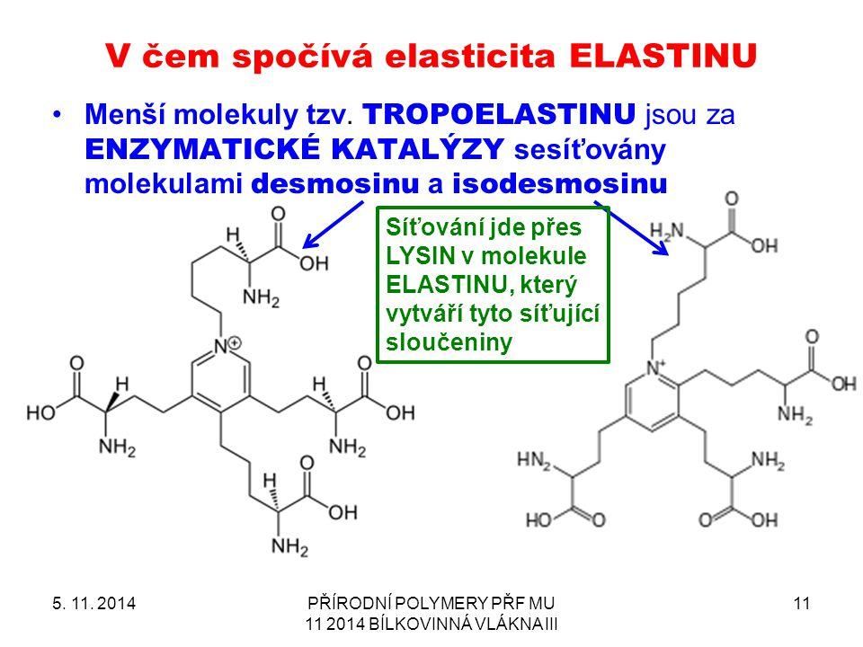 V čem spočívá elasticita ELASTINU