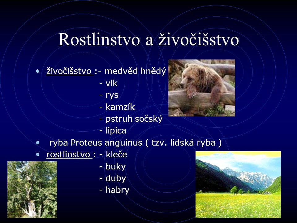 Rostlinstvo a živočišstvo
