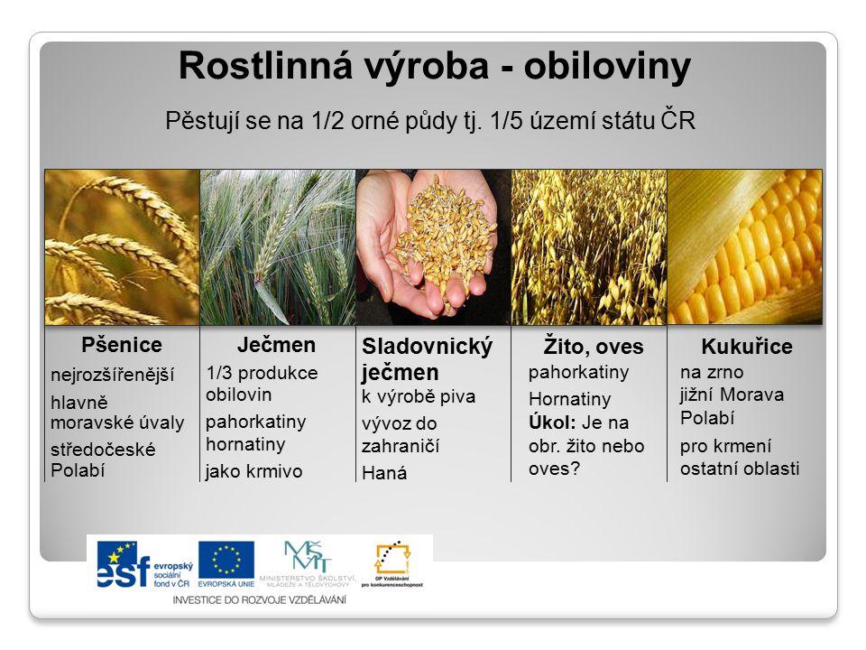 Rostlinná výroba - obiloviny