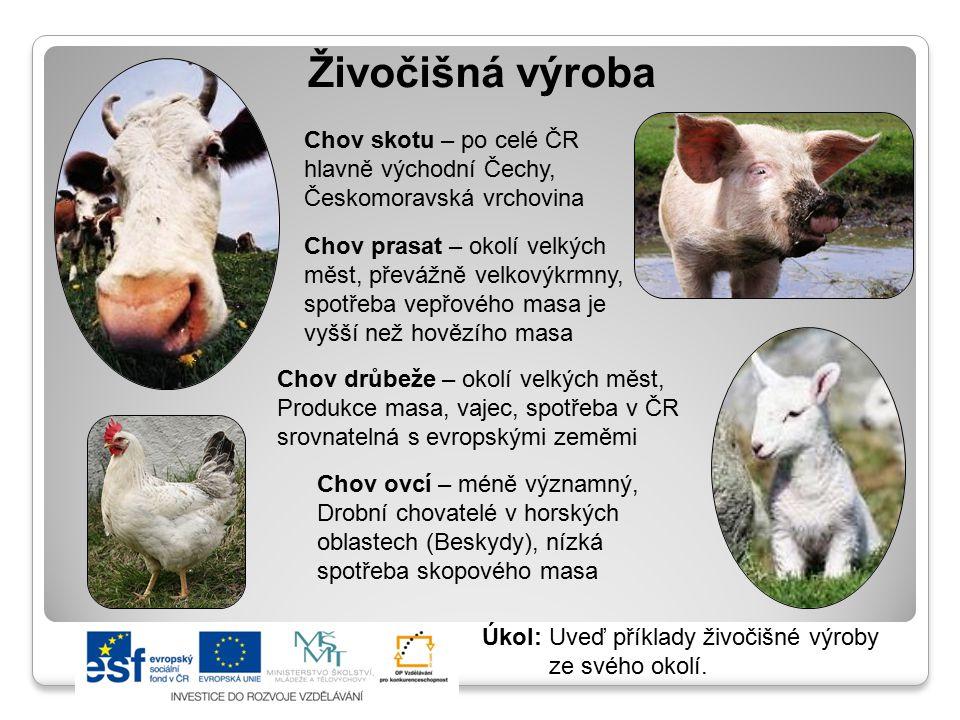 Živočišná výroba Chov skotu – po celé ČR hlavně východní Čechy,
