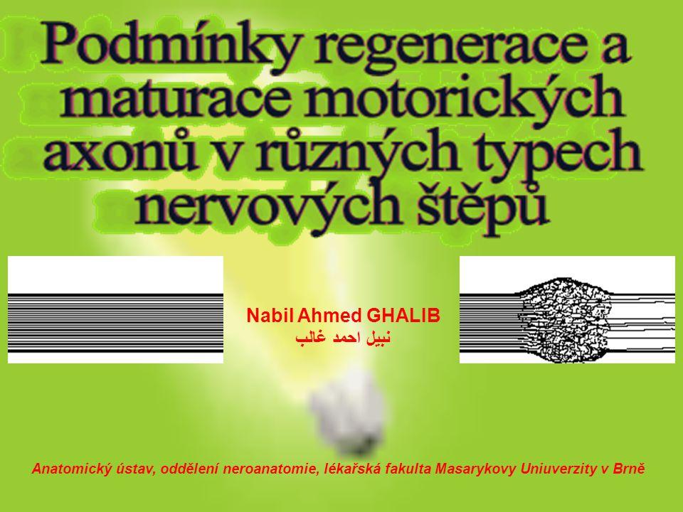 Nabil Ahmed GHALIB نبيل احمد غالب