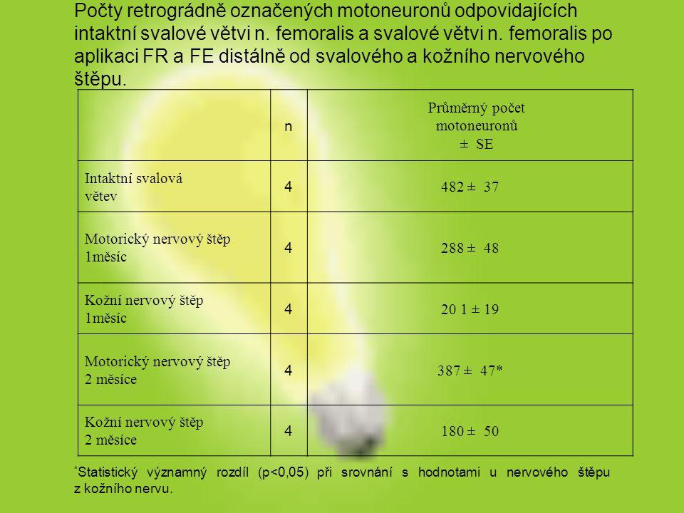 Počty retrográdně označených motoneuronů odpovidajících