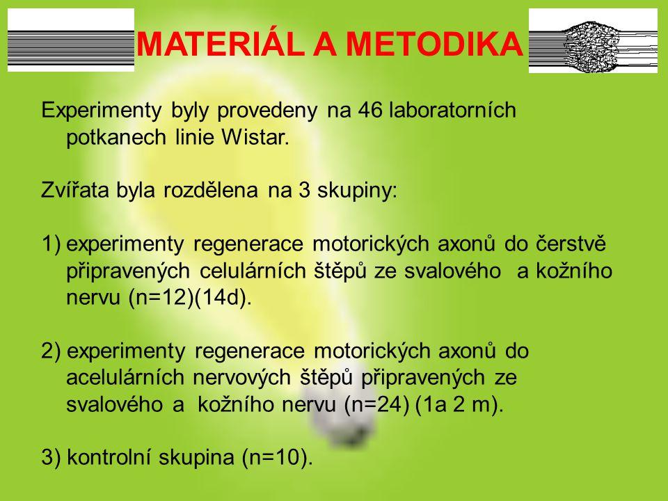 MATERIÁL A METODIKA Experimenty byly provedeny na 46 laboratorních potkanech linie Wistar. Zvířata byla rozdělena na 3 skupiny: