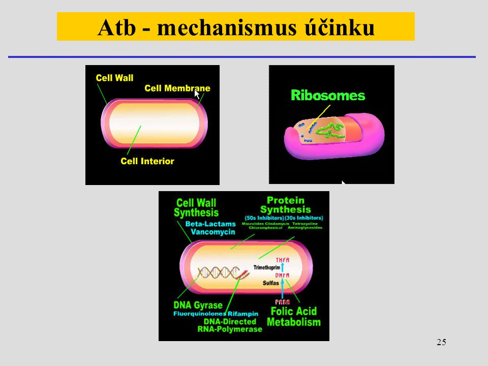 Atb - mechanismus účinku