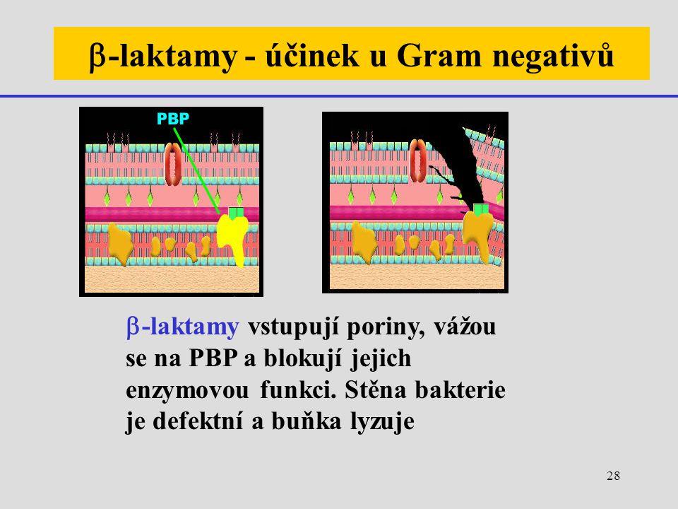b-laktamy - účinek u Gram negativů