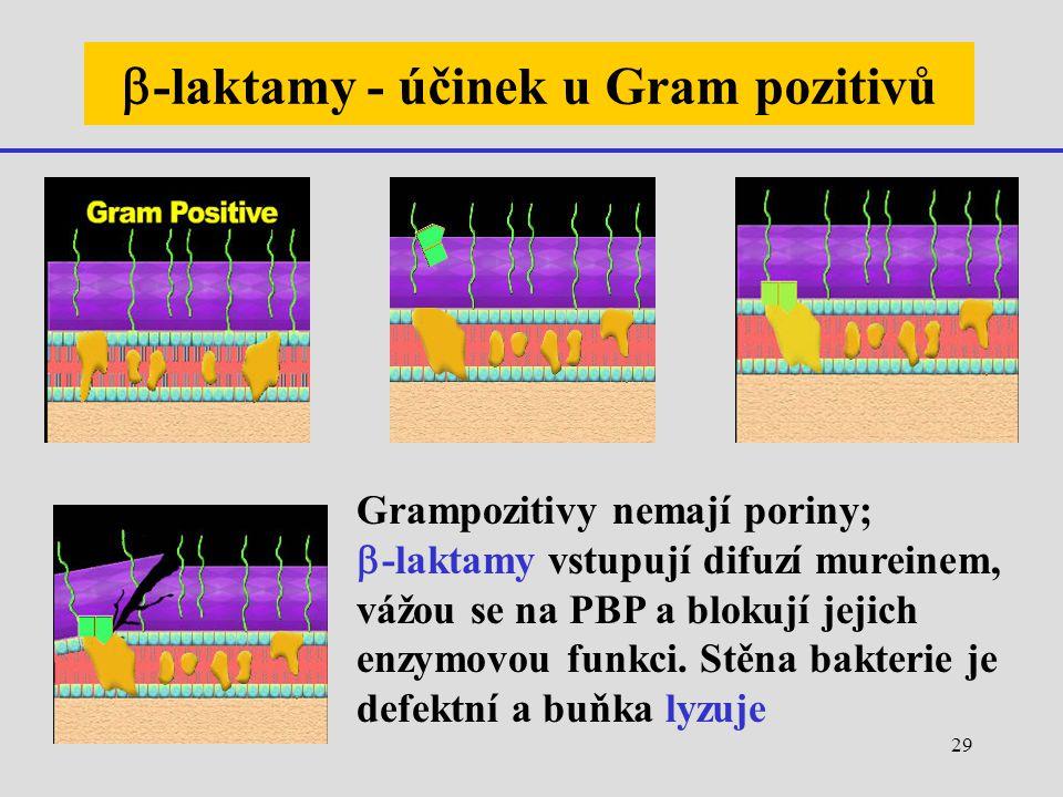 b-laktamy - účinek u Gram pozitivů