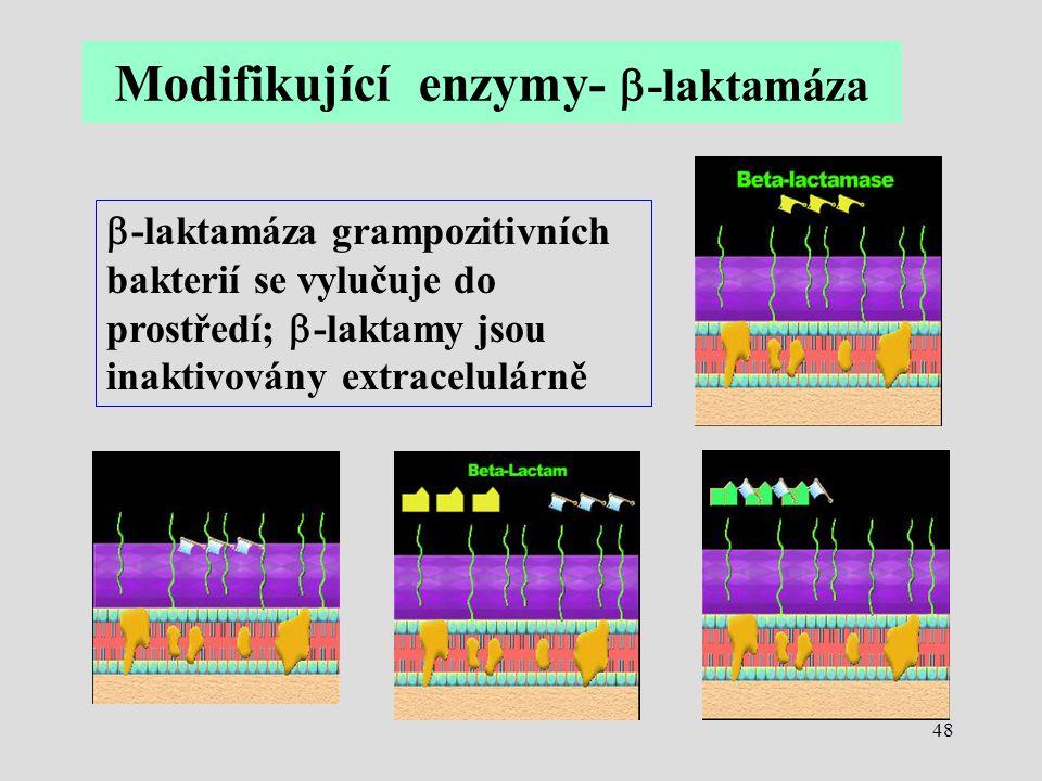 Modifikující enzymy- b-laktamáza