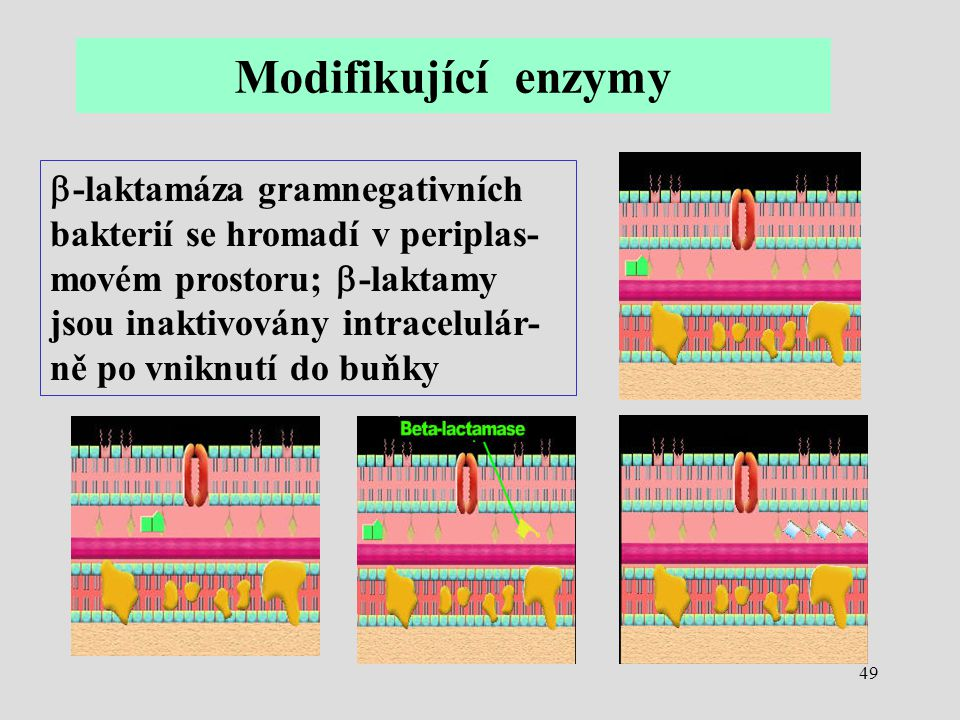 Modifikující enzymy