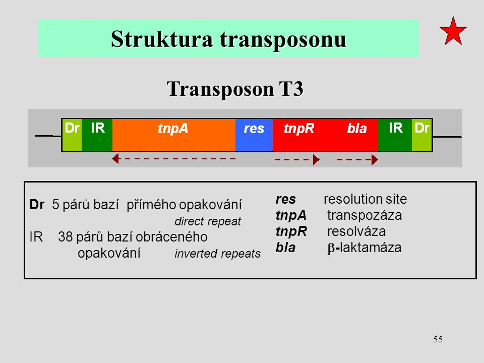 Struktura transposonu