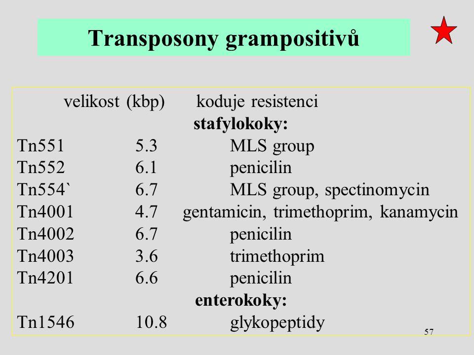 Transposony grampositivů
