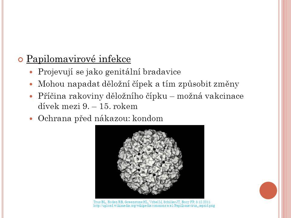 Papilomavirové infekce