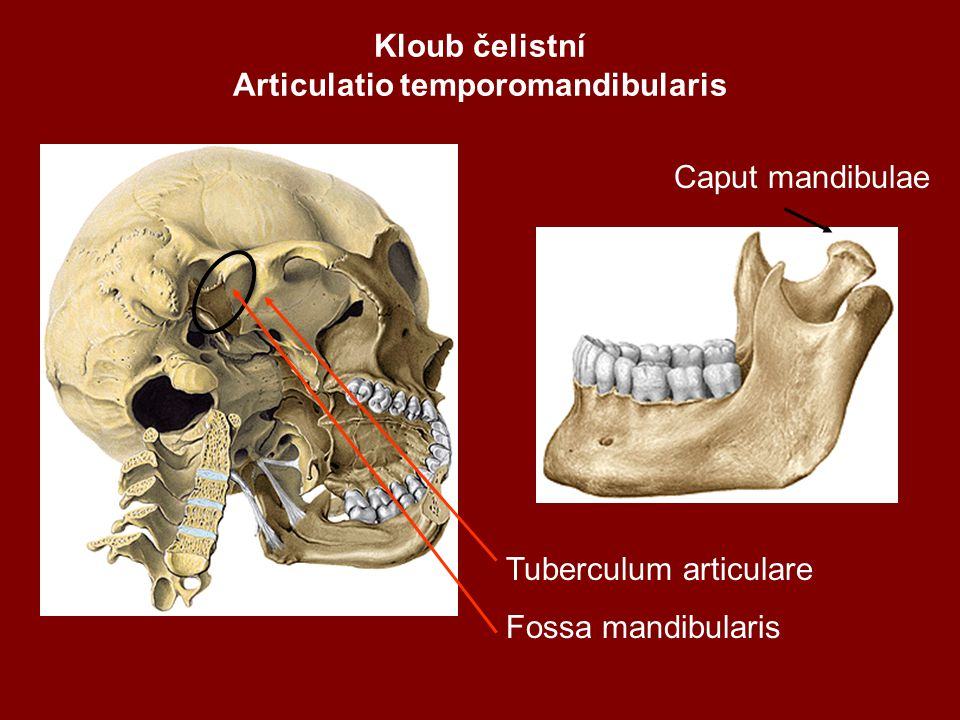 Kloub čelistní Articulatio temporomandibularis