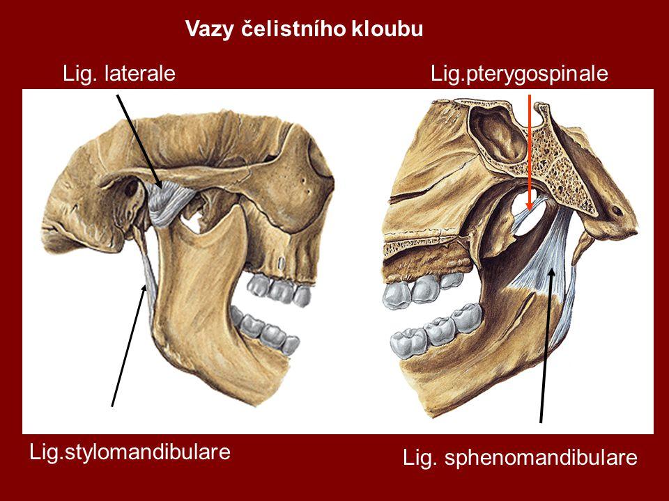 Vazy čelistního kloubu