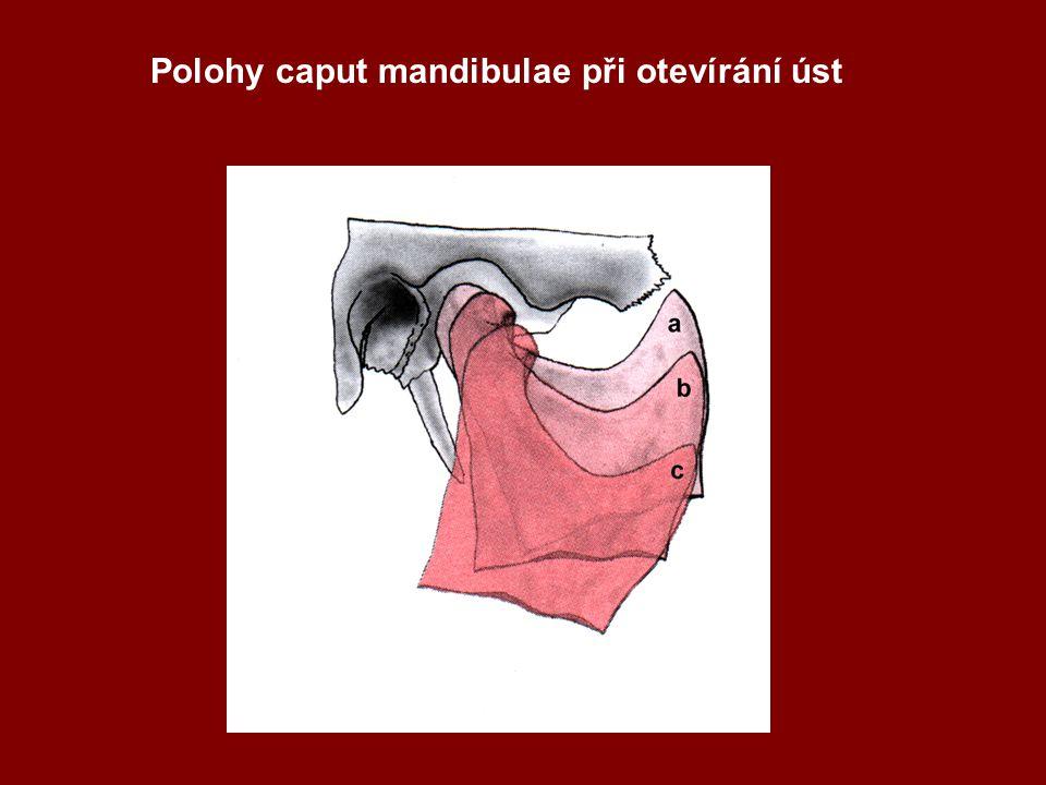 Polohy caput mandibulae při otevírání úst