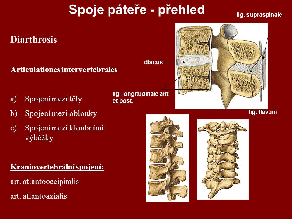 Spoje páteře - přehled Diarthrosis Articulationes intervertebrales
