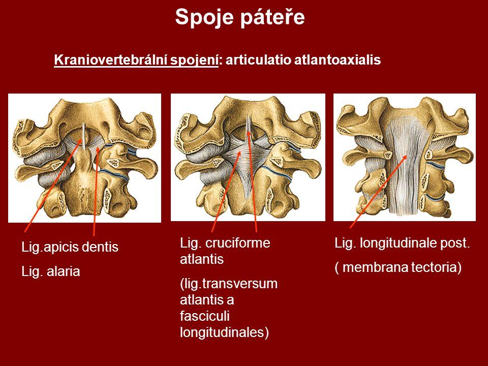 Spoje páteře Kraniovertebrální spojení: articulatio atlantoaxialis