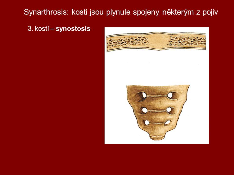 Synarthrosis: kosti jsou plynule spojeny některým z pojiv