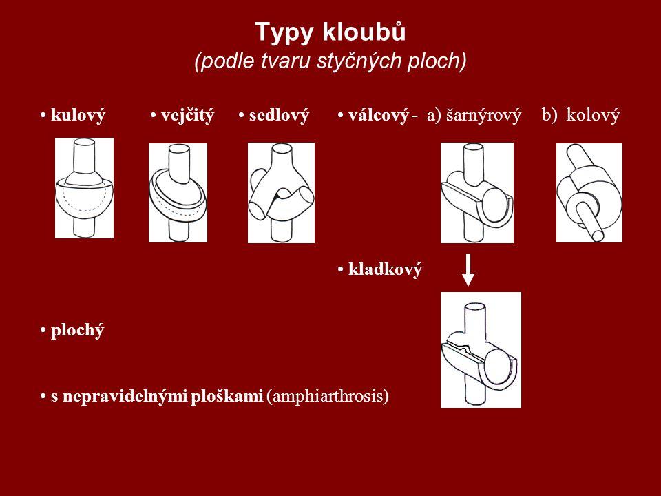 Typy kloubů (podle tvaru styčných ploch)