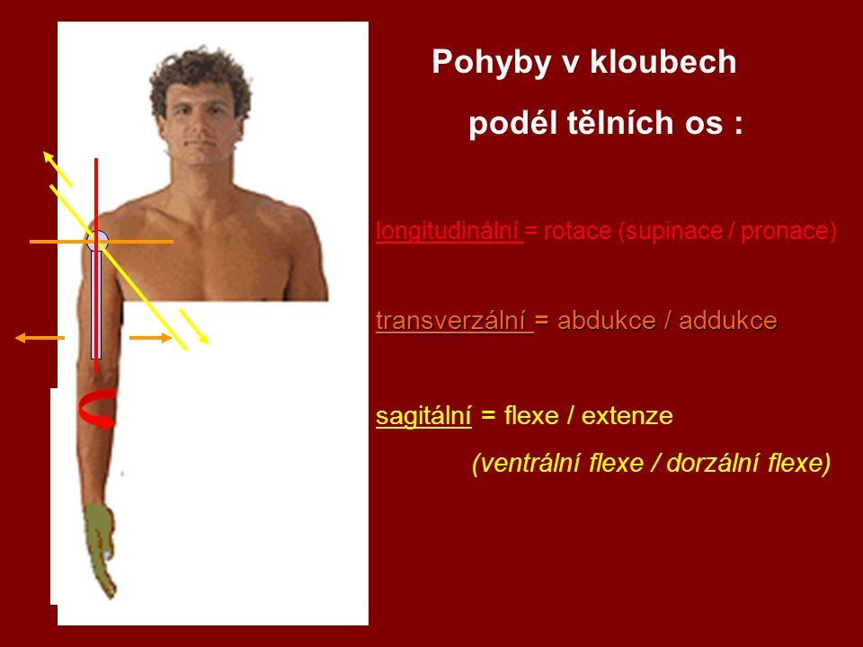 Pohyby v kloubech podél tělních os : transverzální = abdukce / addukce
