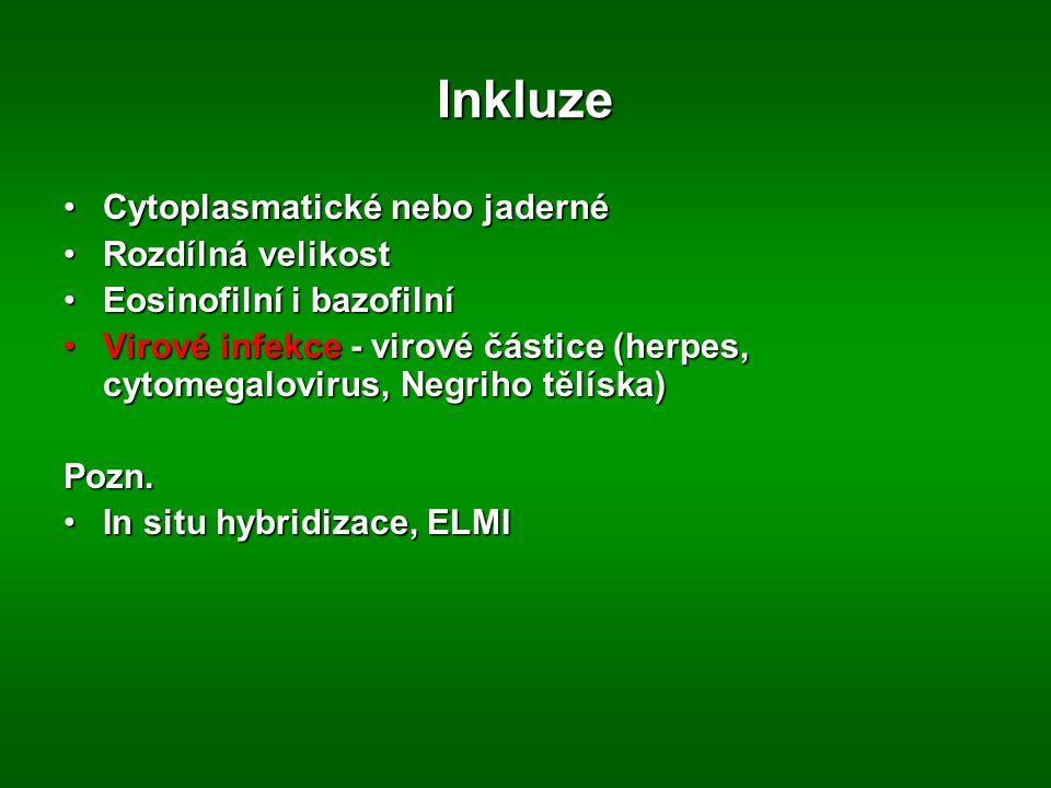 Inkluze Cytoplasmatické nebo jaderné Rozdílná velikost