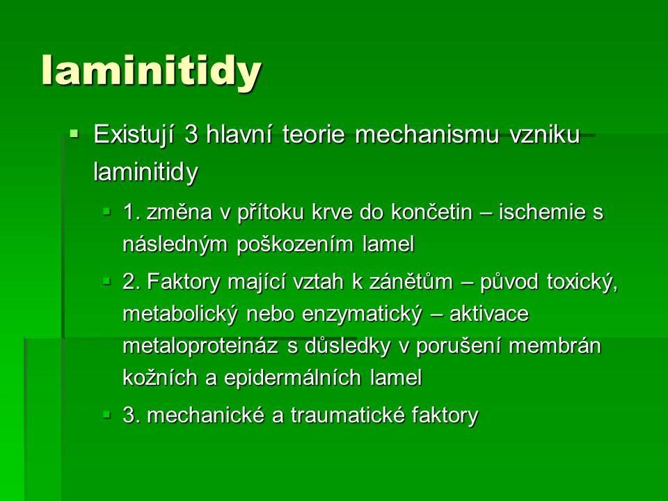 laminitidy Existují 3 hlavní teorie mechanismu vzniku laminitidy
