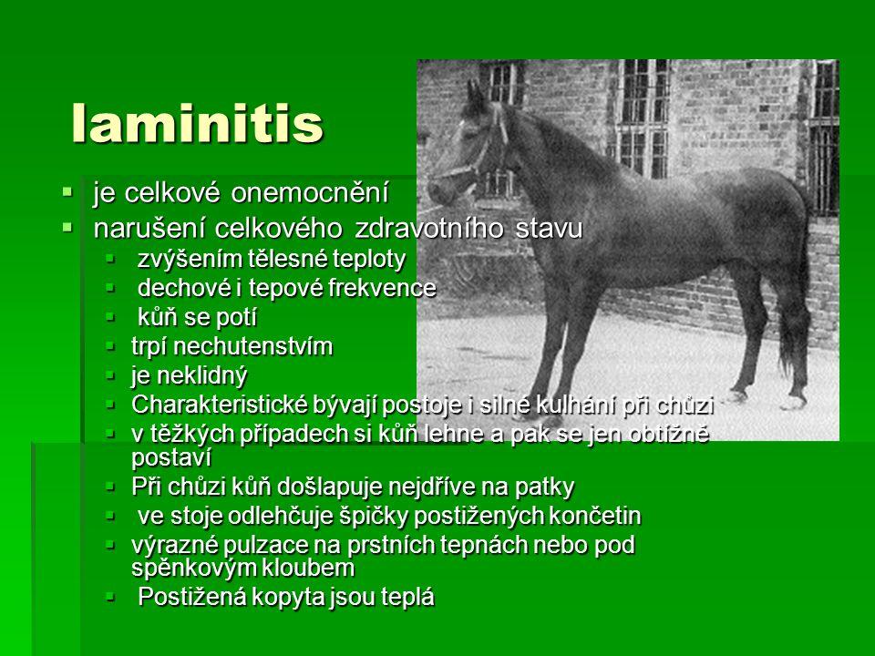 laminitis je celkové onemocnění narušení celkového zdravotního stavu