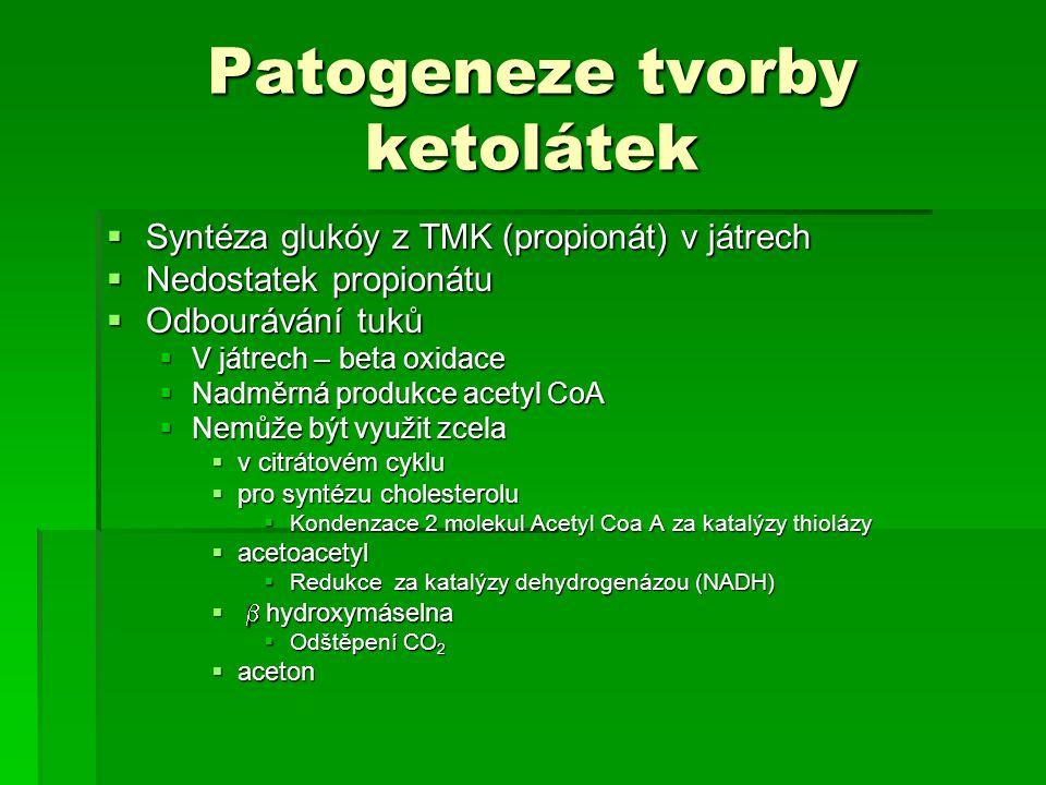 Patogeneze tvorby ketolátek
