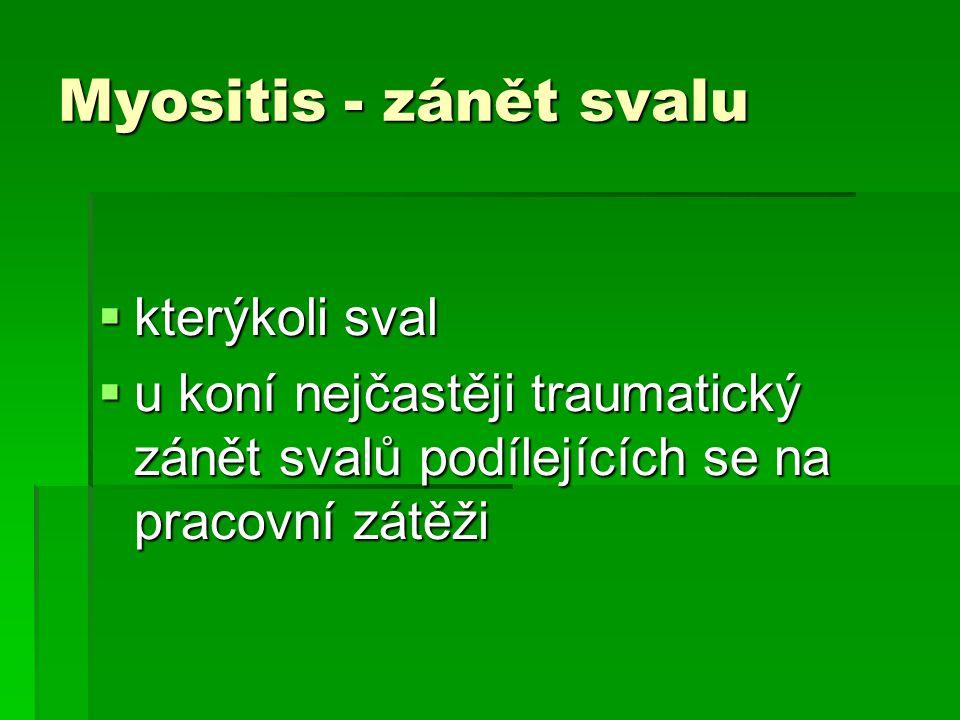Myositis - zánět svalu kterýkoli sval