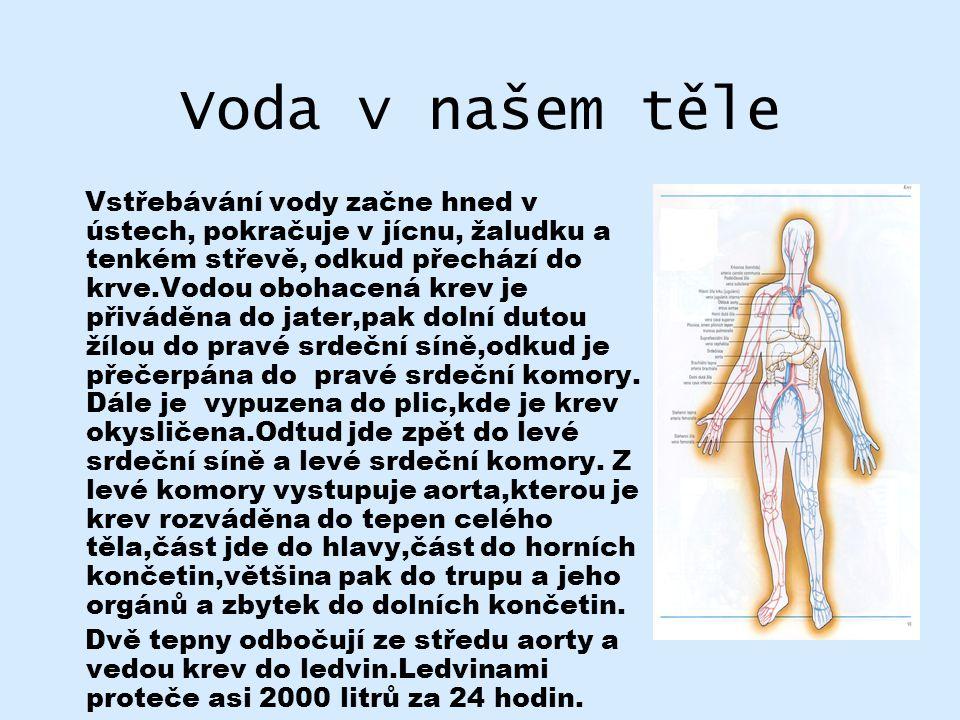 Voda v našem těle