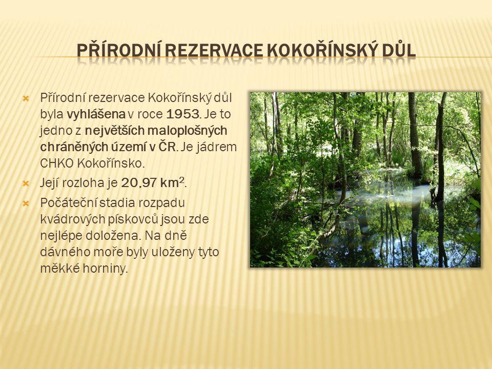 Přírodní rezervace kokořínský důl