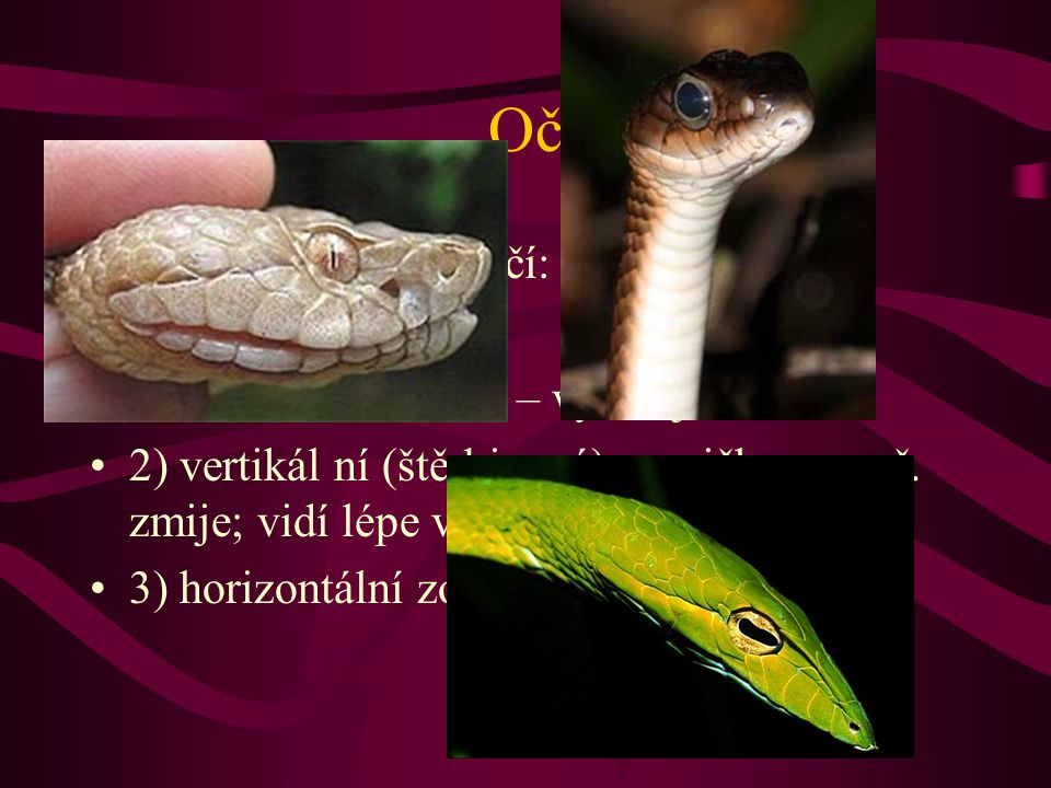 Oči Hadi mají 3 druhy očí: 1) kruhová zornička – vynikající zrak