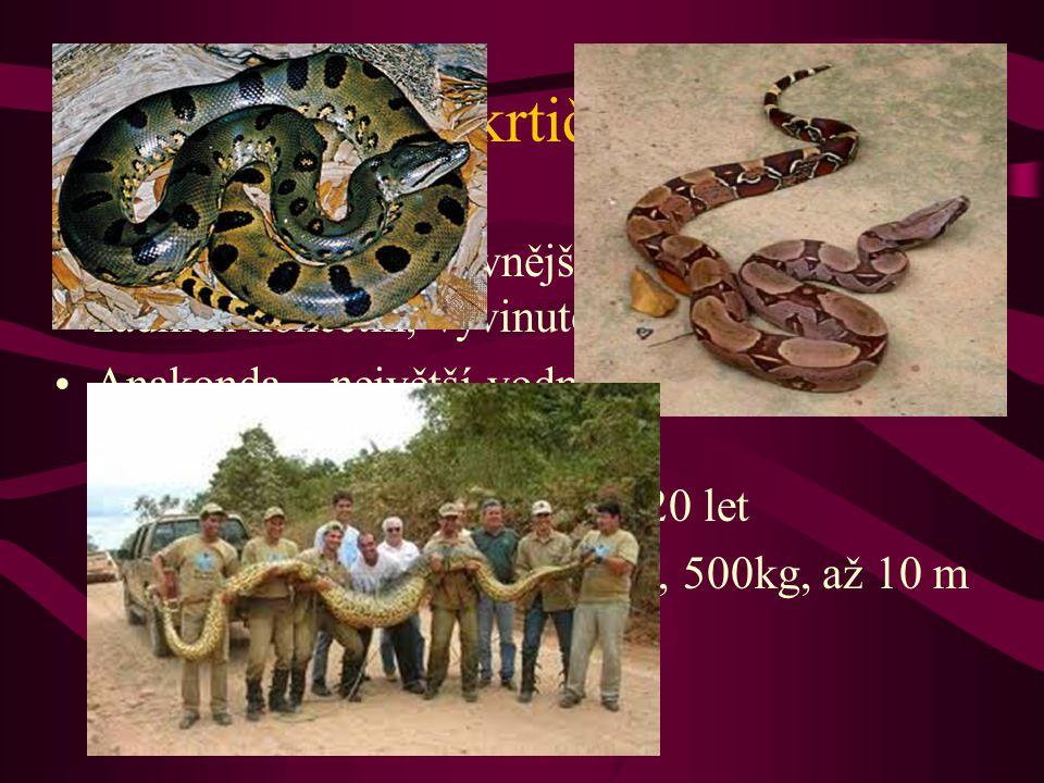 Škrtiči Hroznýš – nejprimitivnější hadi (zbytky zadních končetin, vyvinuté obě plíce)