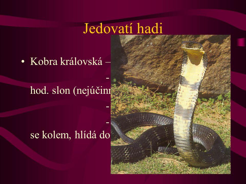 Jedovatí hadi Kobra královská – 4 –5 m, JV Asie