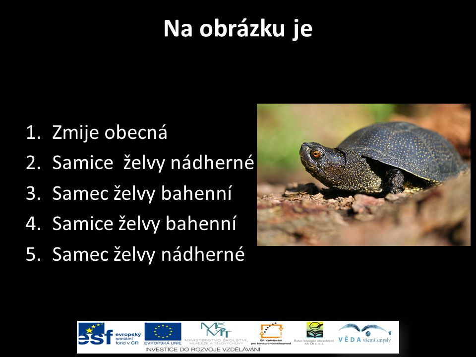 Na obrázku je Zmije obecná Samice želvy nádherné Samec želvy bahenní