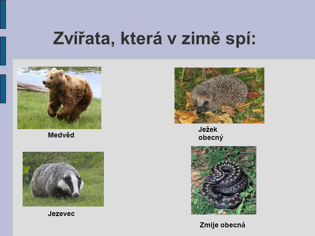 Zvířata, která v zimě spí: