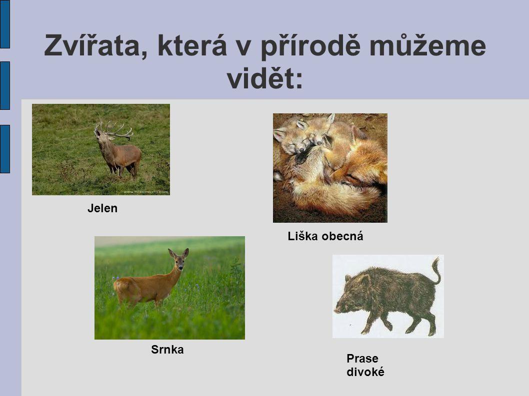Zvířata, která v přírodě můžeme vidět:
